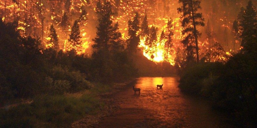 Bakan'dan orman yangınına ilişkin açıklama
