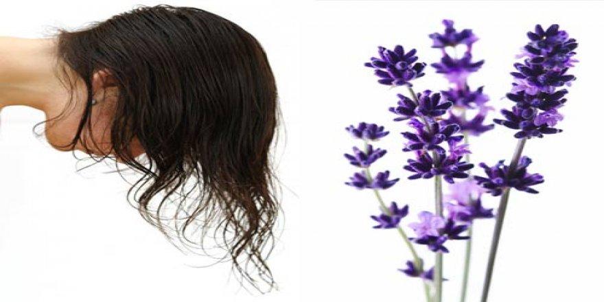 Saç dökülmesine son veren bitki