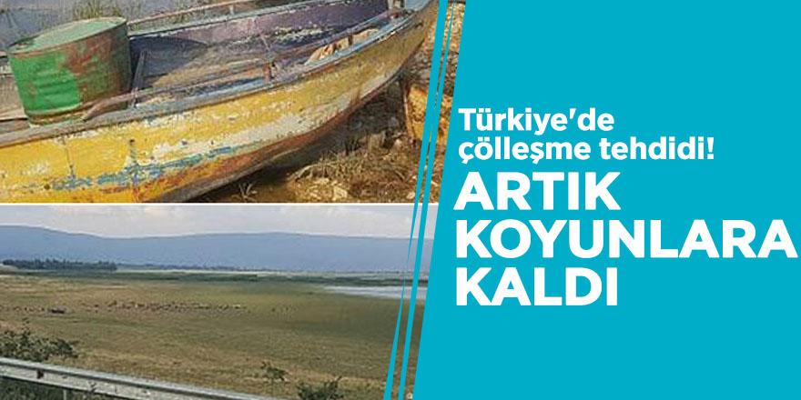 Türkiye'de çölleşme tehdidi! Artık koyunlara kaldı