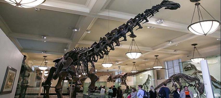 Dinozorların nesli çok daha önce tükenmeye başlamış