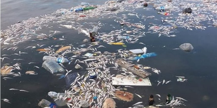 Çevre Ve Şehircilik Bakanlığından Küçükçekmece Gölü'ndeki Balık Ölümlerine İlişkin Açıklama