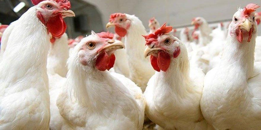 Çin'e gönderilen dondurulmuş tavuk kanatlarında Kovid-19 çıktı!