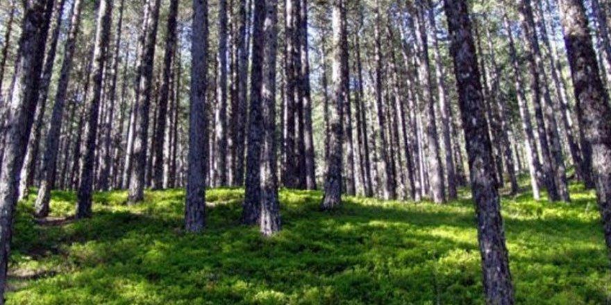 Muğla'da Orman İşletme Müdürü tutuklandı