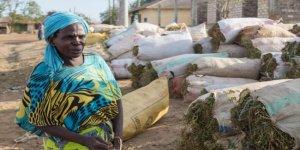 Kenya'da 300 bin kişi bir yudum su bekliyor