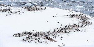 150 bin penguen öldü!