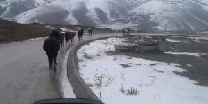 Firar eden atlar Başkent trafiğini felç etti