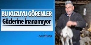 Kayseri'deki 3 kulaklı kuzu görenleri şaşırtıyor