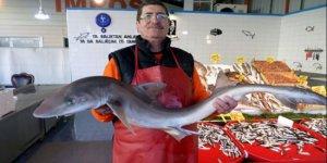 Marmara denizinde ağlara köpek balığı takıldı