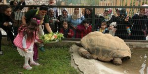 Bu kaplumbağa 97 yaşında!