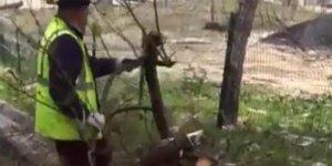 CHP'li belediye ağaç katliamı yaptı!