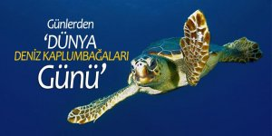 Bugün, 'Dünya Deniz Kaplumbağaları Günü'