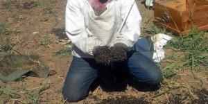 3 milyon arı telef oldu