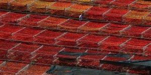 Patlıcan Vadisi'den 65 ton dolmalık kuru biber ihracatı