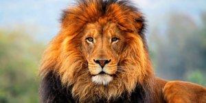 Almanya ayakta! Hayvanat bahçesinden aslanlar ve kaplanlar kaçtı
