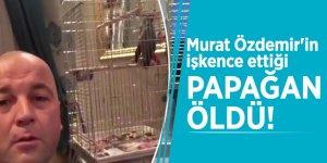 Murat Özdemir'in işkence ettiği papağan öldü!