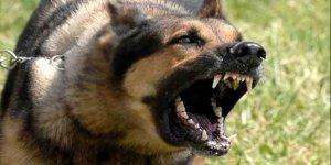 Patnos'ta sokak köpeği dehşeti