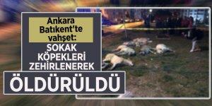 Ankara'da köpek katliamı!