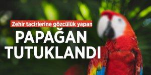 Zehir tacirlerine gözcülük yapan papağan tutuklandı