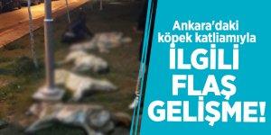 Ankara'daki köpek katliamıyla ilgili flaş gelişme!