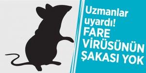 """Uzmanlar uyardı! """"Fare virüsünün şakası yok"""""""