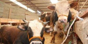 Kurban pazarlarında hayvanlar erken tükendi