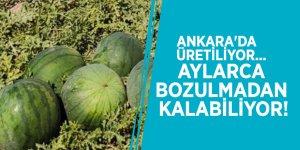 Ankara'da üretiliyor... Aylarca bozulmadan kalabiliyor!
