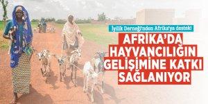 İyilik Derneği'nden Afrika'ya destek! Hayvancılığın gelişimine katkı sağlanıyor...