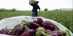 Rusya'dan Türk patlıcanına ithalat engeli