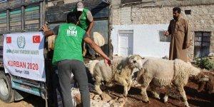 İHH Suriye'de Kurban Bayramı'nda kesilecek hayvanların alımını tamamladı!