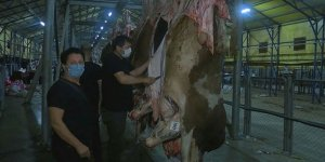 CHP'li İBB'nin kurban kesim alanında skandal! Görevliler kaçtı etler çürüdü