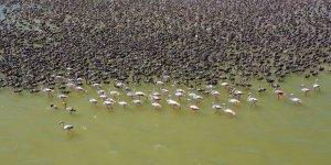 Göçmen kuşların dinlenme alanları görenleri hayran bırakıyor