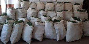 1 milyon 119 bin kök kenevir ve 756 kilogram esrar ele geçirildi!