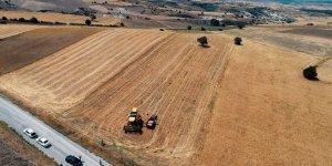 Mansur Yavaş'ın bir hayali daha gerçek oldu! Sözleşmeli üretici çiftçiler ilk hasada başladı