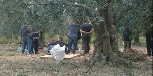 Tarlada Romalılardan kalma oda mezarı bulundu