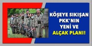 Köşeye sıkışan PKK, bu alçak plana başvurdu!