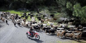 Bodrum'da herkes sürüsünü drone ile takip eden 'teknolojik Çoban' Cemil'i konuşuyor