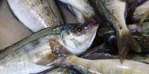 Balıkçı tezgahlarının yeni gözdesi menekşe balığı oldu