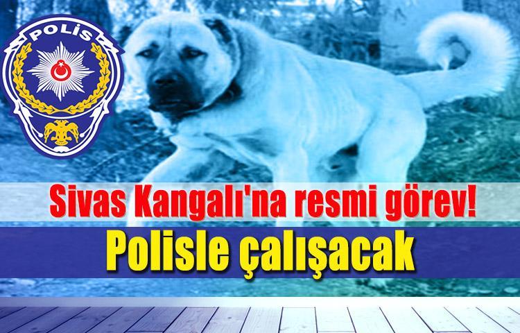 Sivas Kangalı'na resmi görev! Polisle çalışacak